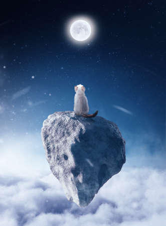 Cat sits on a floating rock above clouds looking at the moon.