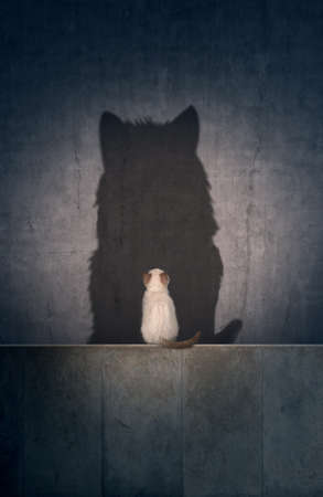 A small cat with a big cat shadow