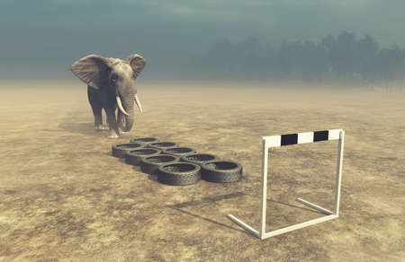 Elephant in front of training tire . Get fit and weight loss concept . This is a 3d render illustration .