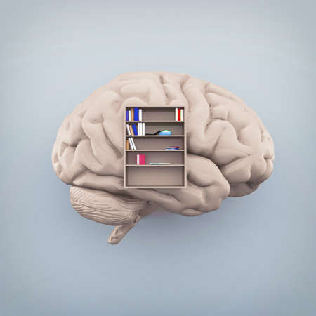 Human brain with a library inside and books. Knowledge and self development concept . This is a 3d render illustration.