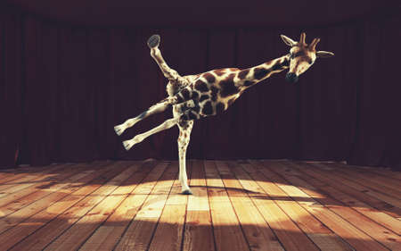 Giraffe dancing on stage . This is a 3d render illustration .