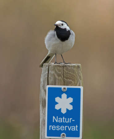Wagtail on the fence post, and a sign with the conservation area  photo