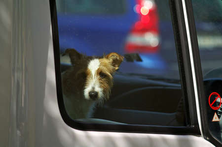 waiting convict: Lonely dog in the car waiting for her master Stock Photo