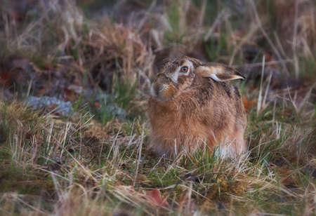 hare: Hare (desambiguaci�n)