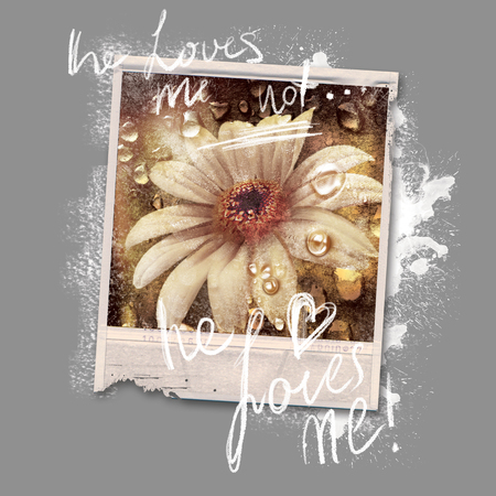 the art of divination: Old photo of daisies on a camera. Flower with drops of dew. Summer photo after the rain. Vintage style, grunge. Gray background with spots of white paint. Resembles a watercolor picture. Stock Photo