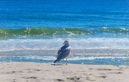 montauk: Seagull on the Atlantic ocean beach