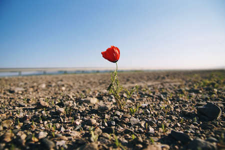 Lonely but stubborn flower in the barren