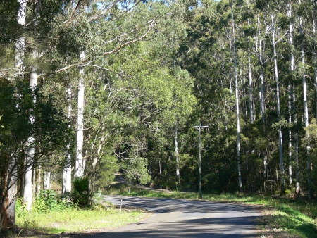forster: Road through the bush