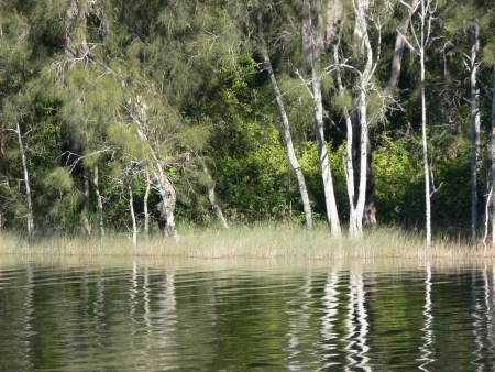 forster: Bush reflections