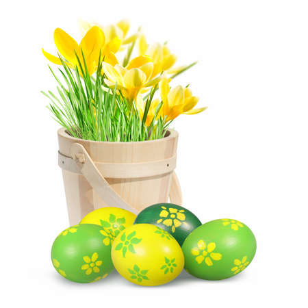 Easter eggs and crocuses on the white background  photo