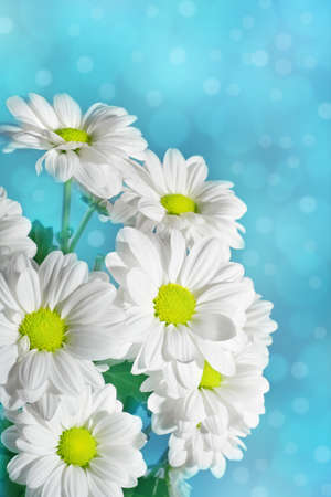 Daisies flowers on blue background photo