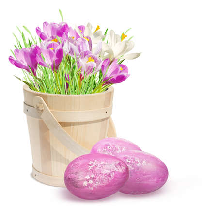 Easter eggs and crocuses isolated on white background  Easter decoration  photo