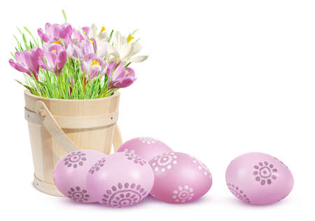 Easter eggs and crocuses isolated on white background  photo