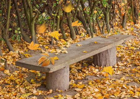 bench alone: Empty wooden bench in the park