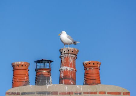 A single seagull perched on one of 4 read chimney pots with a blue sky background. Foto de archivo