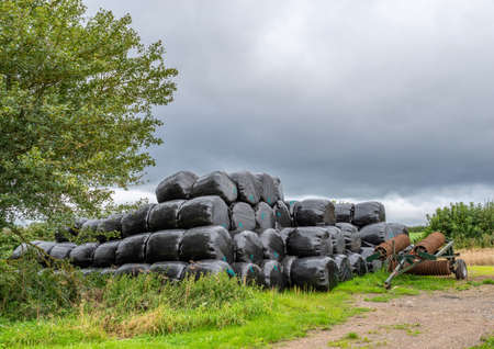 Hat bales rolled and wrapped in black plastic next to a tractor soil loosener.