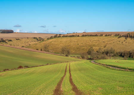 Tractor tracks in a newly sown green field with blue sky.