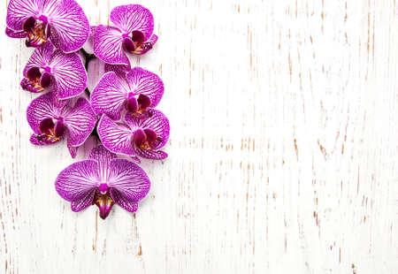 flor violeta: Las orqu�deas flores en un viejo fondo de madera blanca Foto de archivo