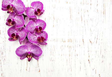 tropical flowers: Orchids flowers on a old white wooden background