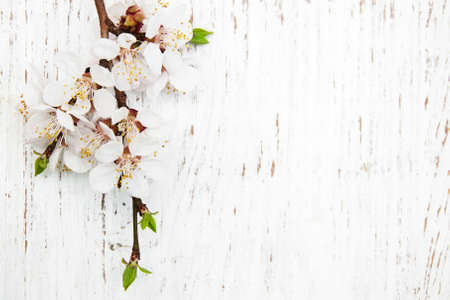 spring apricot blossom on a old wood background Imagens