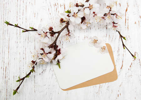 spring apricot blossom with card on a wooden background Imagens