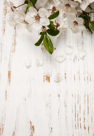 flowers close up: spring cherry  blossom on a old wood background