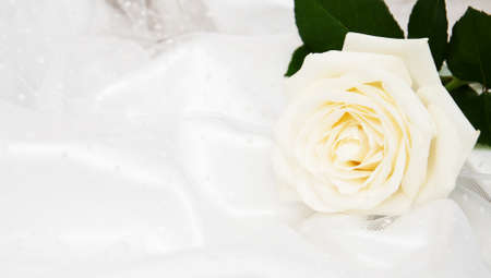 White rose on white silk wedding background Imagens