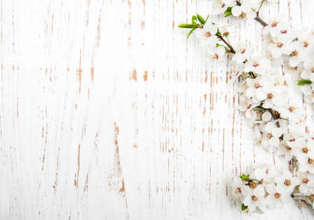 spring cherry  blossom on a old wood background