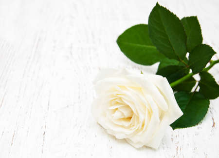 white space: white rose  on the old wooden table
