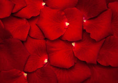 Close up - Red rose petals - natural background 写真素材