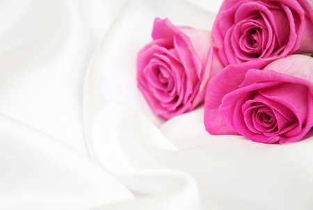 rosas rosadas: Rosas rosadas en un fondo de seda blanco Foto de archivo