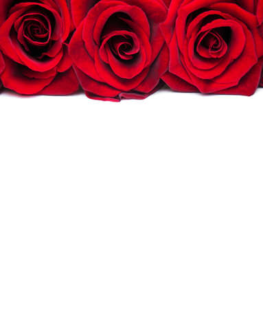 Fresh Red roses on a white background 写真素材