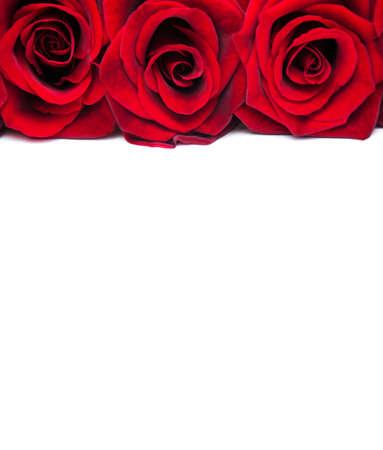 ramo de flores: Rosas rojas frescas en un fondo blanco
