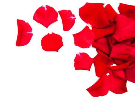 petali di rose rossi isolati su uno sfondo bianco