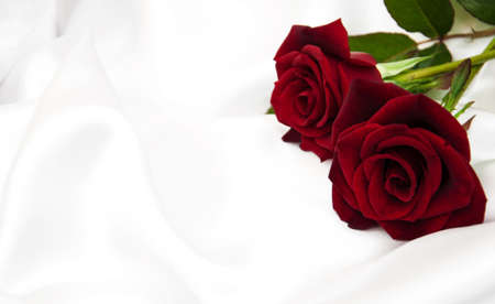 Red roses on a white  satin background Imagens