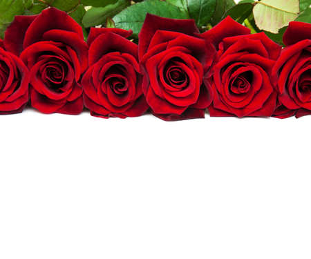 Fresh Red roses on a white background Archivio Fotografico