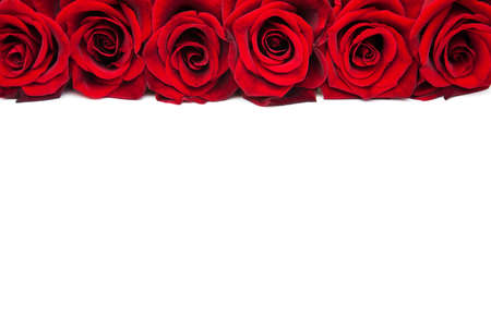 Fresh Red roses on a white background Banco de Imagens
