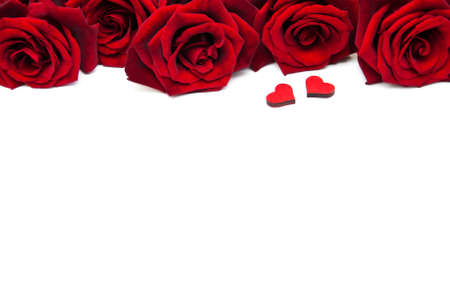 Fresh Red roses on a white background Stock Photo