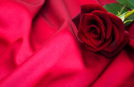 satin background: Red rose on a red satin background