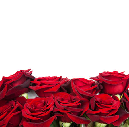 white frame: Fresh Red roses on a white background Stock Photo