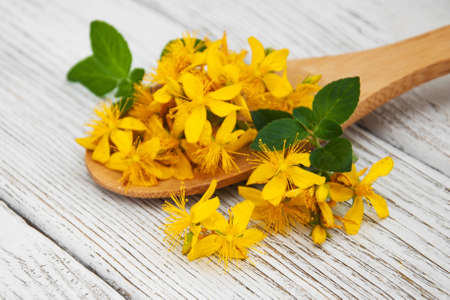 Saint-Johns-wort in the spoon on a wooden table Stock Photo