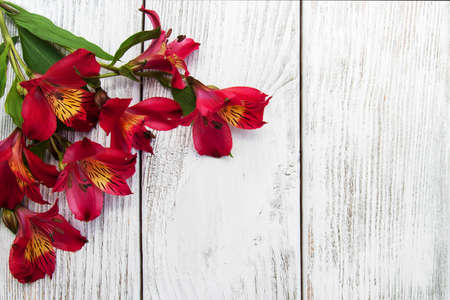 alstroemeria flowers on a old white wooden background