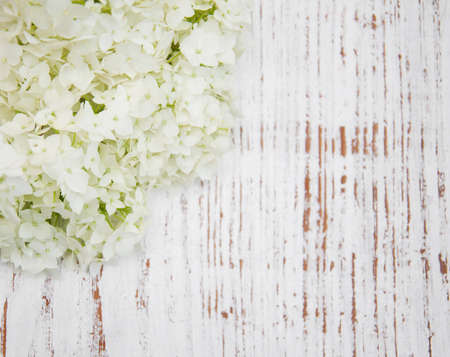 white hydrangea  on a old wooden background