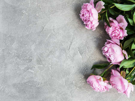 beautiful pink  peony flowers on a stone background Stock Photo