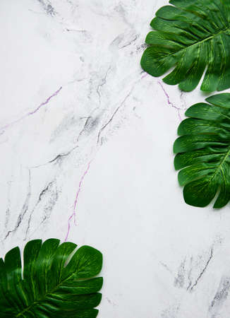Monstera leaves on a marble background flat lay