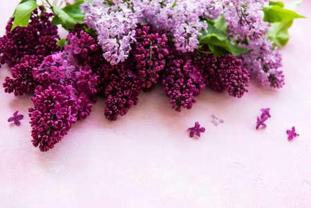 Lilac spring flower border on a pink concrete background Standard-Bild