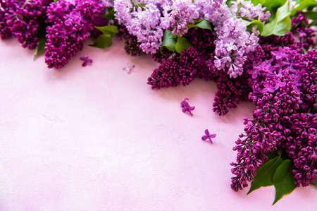 Lila Frühlingsblumengrenze auf einem rosa Betonhintergrund