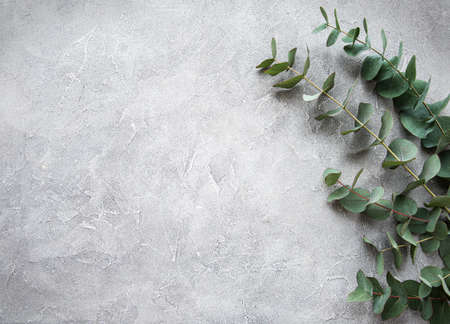 Eucalyptus branches and leaves on a grey concrete background
