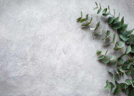 Eukalyptuszweige und -blätter auf grauem Betonhintergrund Standard-Bild