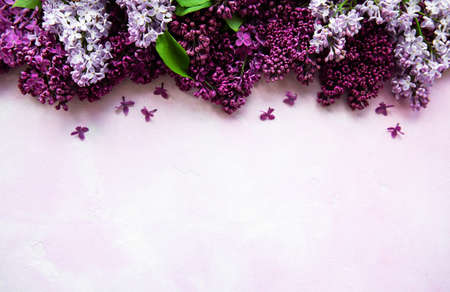 Lilac spring flower border on a pink concrete background